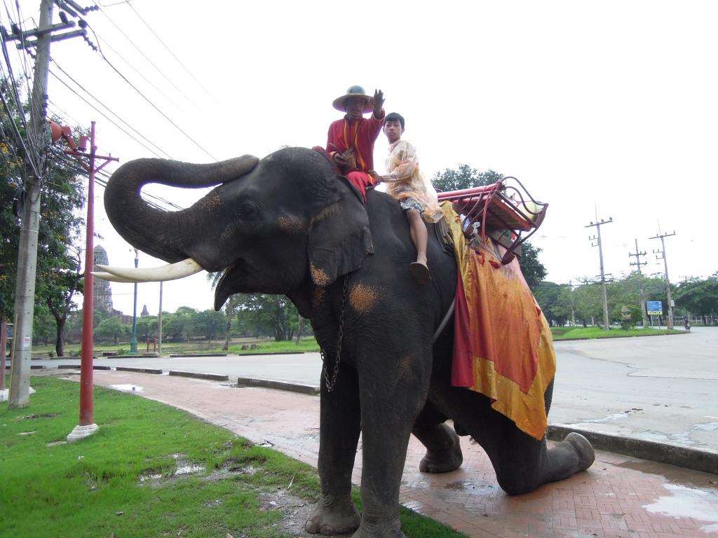 Co potrafi słoń, fot. M. Lehrmann