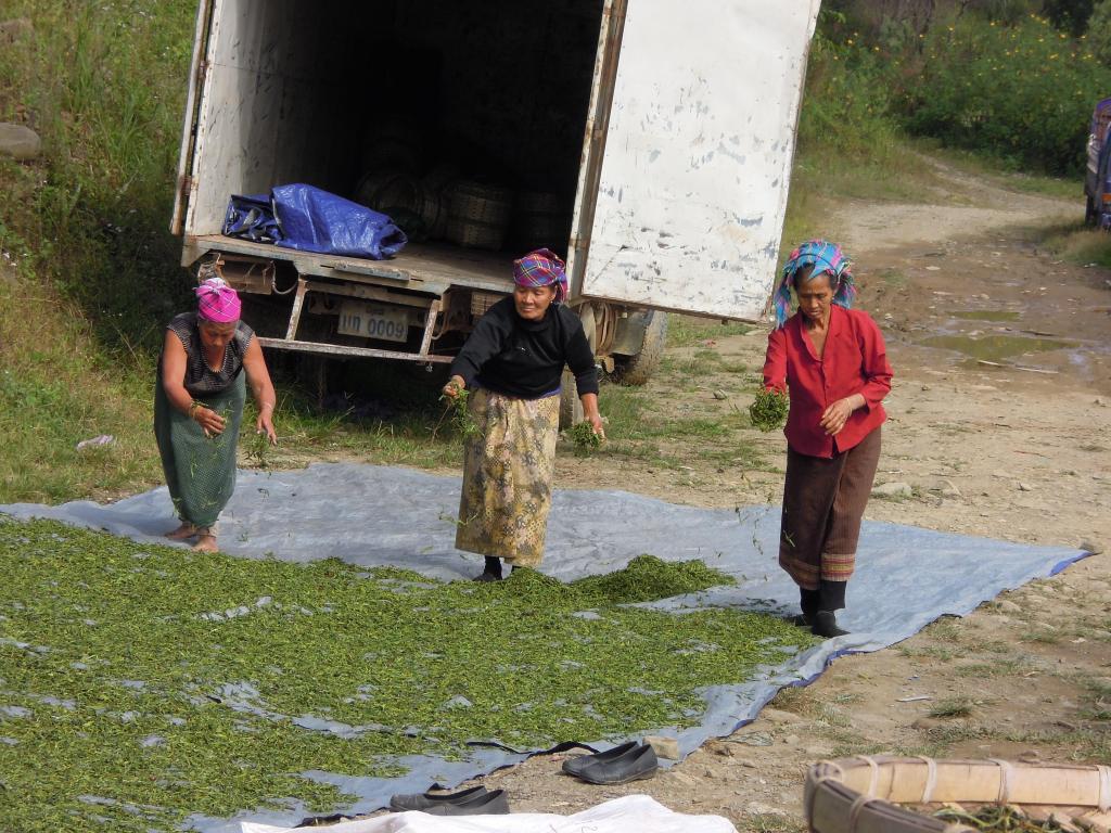 Praca w fabryce herbaty, Phongsali, fot. A. Mielczarek