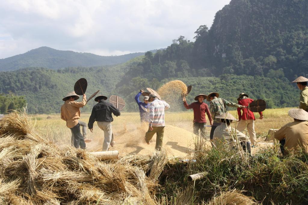 Rolnicy na polu ryżowym, wioska Ban Na nieopodal Muang Noi Neua, fot. Pep Puig