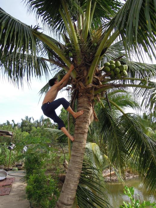 Mleko kokosowe nie może być świeższe, fot. M. Lehrmann