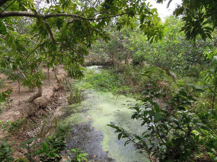 Typowy ogród w Delcie Mekongu, fot. A. Mielczarek