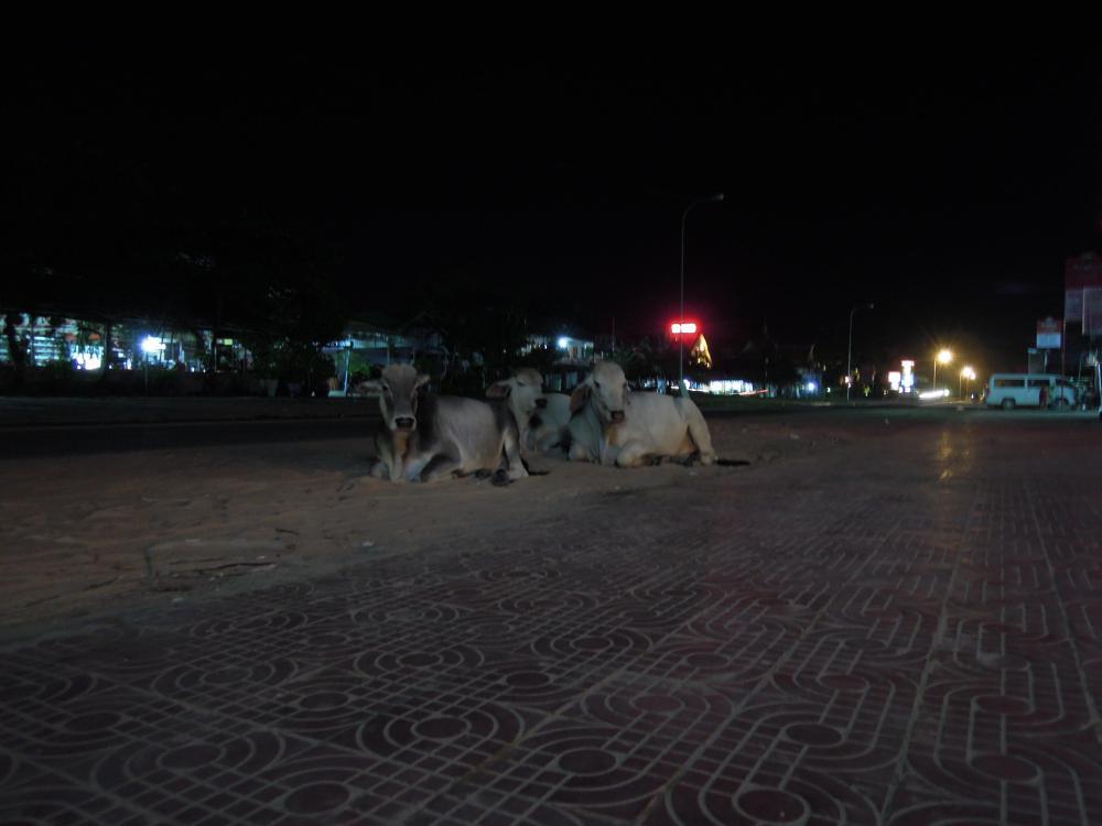 Krowy w centrum kurortu? Spokojnie, to Kambodża. Sihanoukville, fot. M. Lehrmann