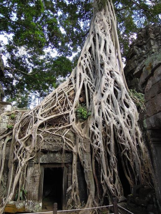 """Wat Ta Prohm, zamożny buddyjski klasztor zbudowany na przełomia XII i XIII w., gdzie kręcono kilka scen filmu """"Tomb Rider"""" z Angeliną Jolie, fot. M. Lehrmann"""
