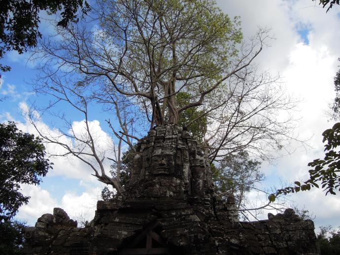 Preah Khan, przełom XII i XIII w, służyła jako buddyjski uniwersytet z ponad 1000 nauczycieli, fot. M. Lehrmann
