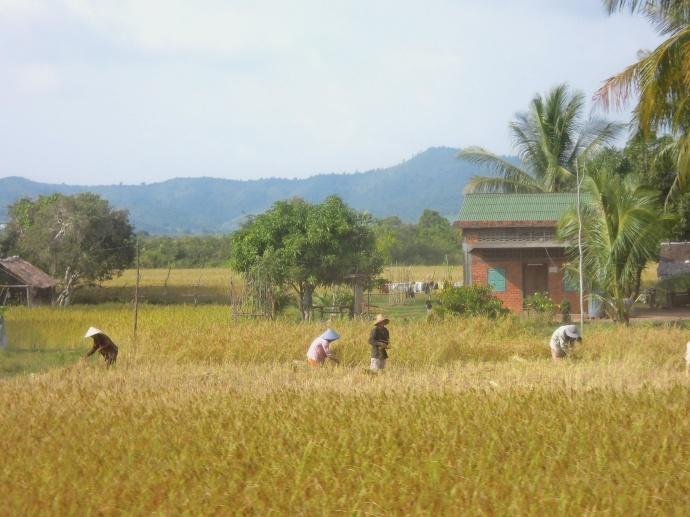 Rolnicy w polu, południowa Kambodża, fot. M. Lehrmann