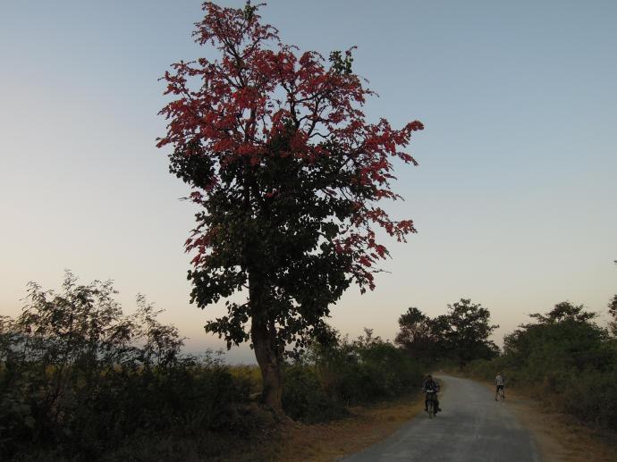 Drzewo, okolice Nyaung Shwe, fot. M. Lehrmann