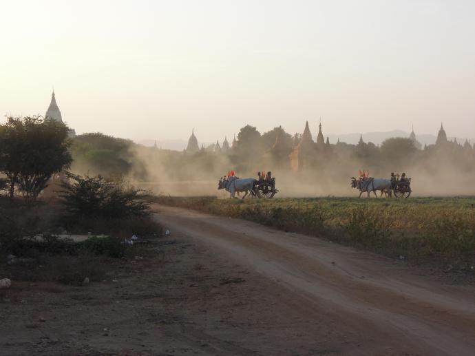 Wozy zaprzężone w woły. Podróż do Bagan to podróż w czasie, fot. M. Lehrmann