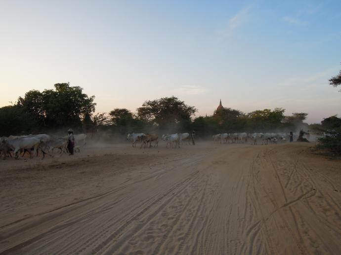 Polne drogi i pasterze bydła to autentyczne doświadczenie z Birmy, fot. M. Lehrmann
