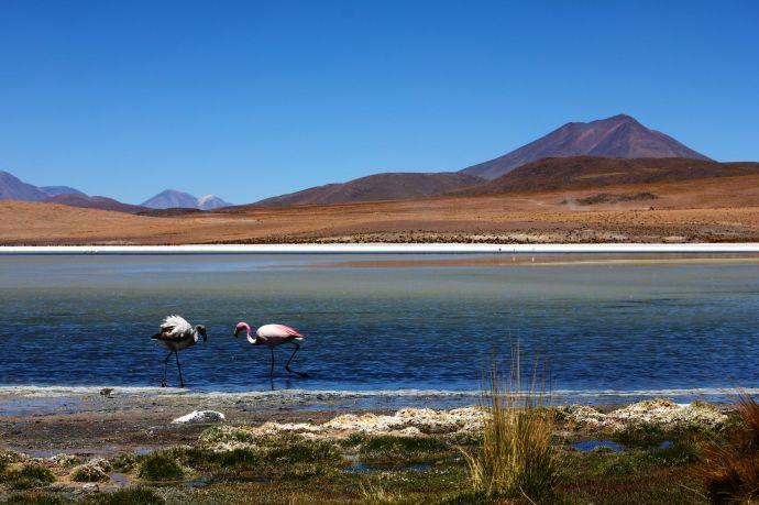 Tu rozmnażają się flamingi, Laguna Colorada, Boliwia,  fot. O'n'G