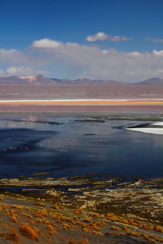 Laguna Colorada, Boliwia. Jej czerwony kolor bierze się od osadów mineralnych oraz pigmetów pewnego gatunku alg, fot. O'n'G
