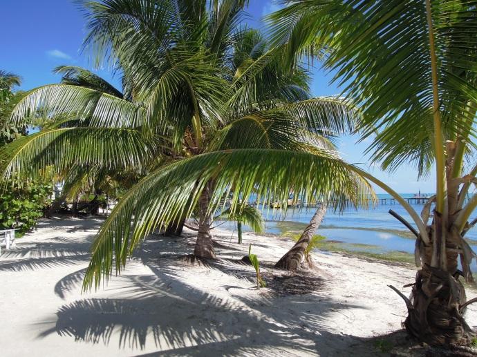 Palmowa aleja, Caye Caulker, Belize, fot. M. Lehrmann