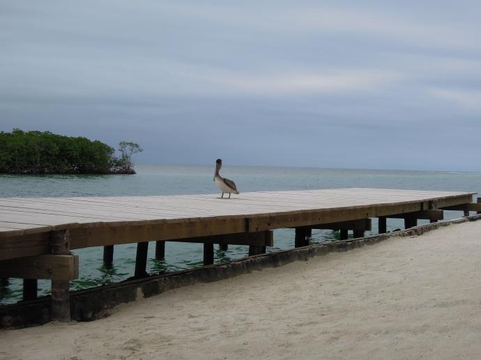 Split, czyli kanał dzielący wyspę na dwie części powstał w wyniku uderzenia Huraganu Hattie w 1961 r., następnie poszerzony, Caye Caulker, Belize, fot. M. Lehrmann