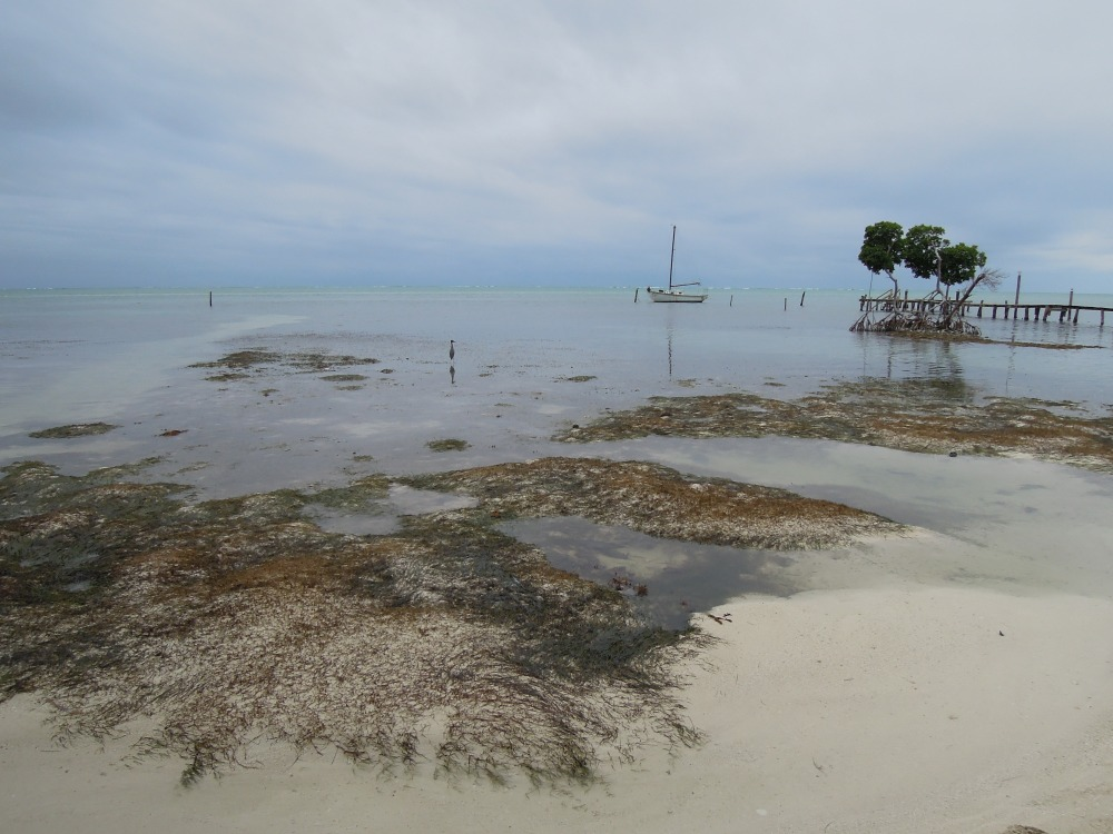 Wielki błękit, Caye Caulker, Belize, fot. M. Lehrmann