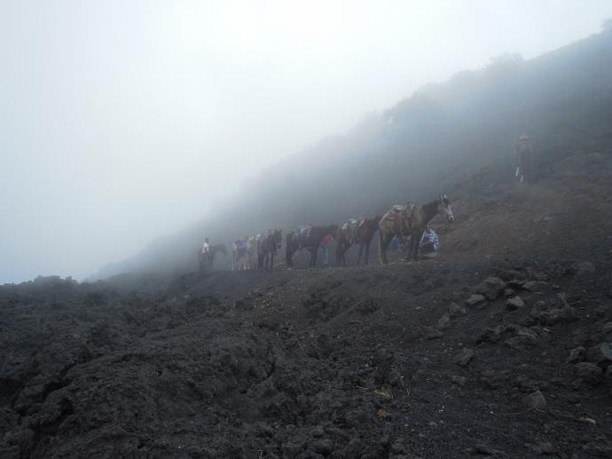 Konie dla zmęczonych wędrowców, Wulkan Pacaya, Gwatemala, fot. M. Lehrmann