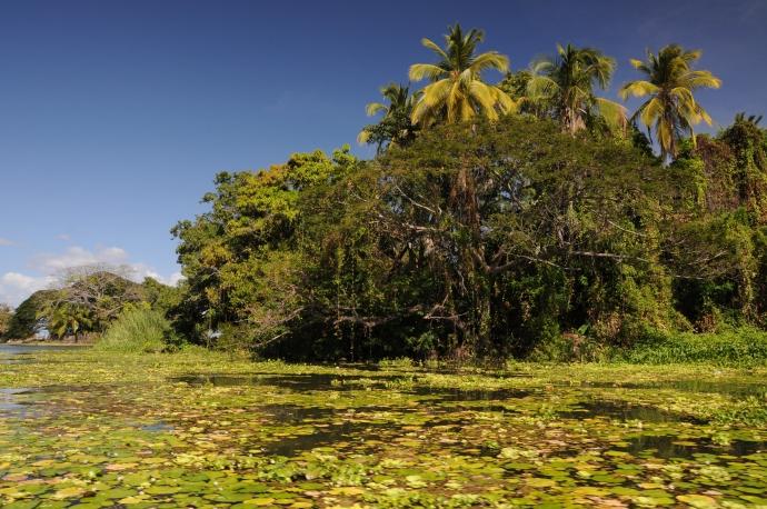 Tropikalna zieleń, Jezioro Nikaragua, fot. Ula Kupińska