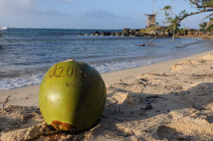 Kokos wypity z gwinta, Little Corn Island, fot. Ula Kupińska