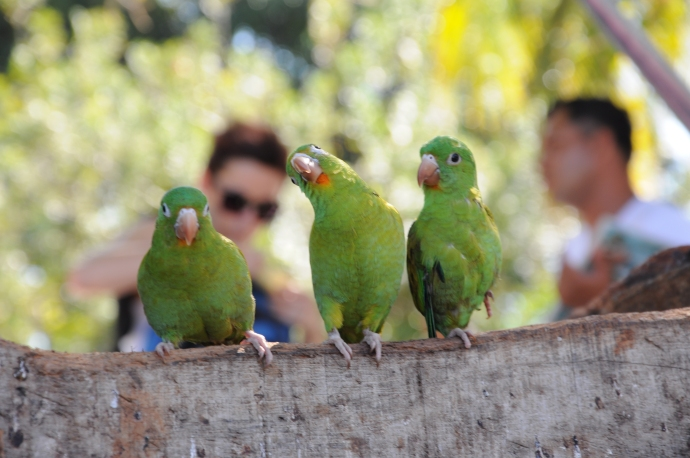 Papugi i ludziska, Granada, fot. Ula Kupińska
