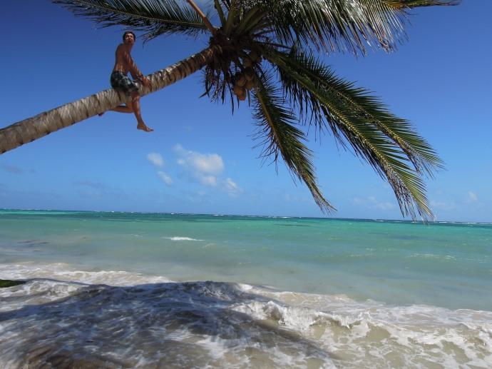 Kokosy prosto z drzewa, Little Corn Island, fot. A. Mielczarek
