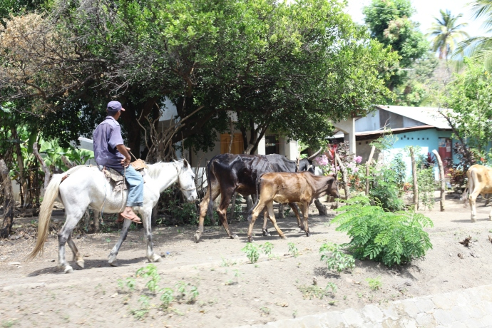 Senne wiejskie życie, Isla de Ometepe, Nikaragua, fot. Iona Hodgson