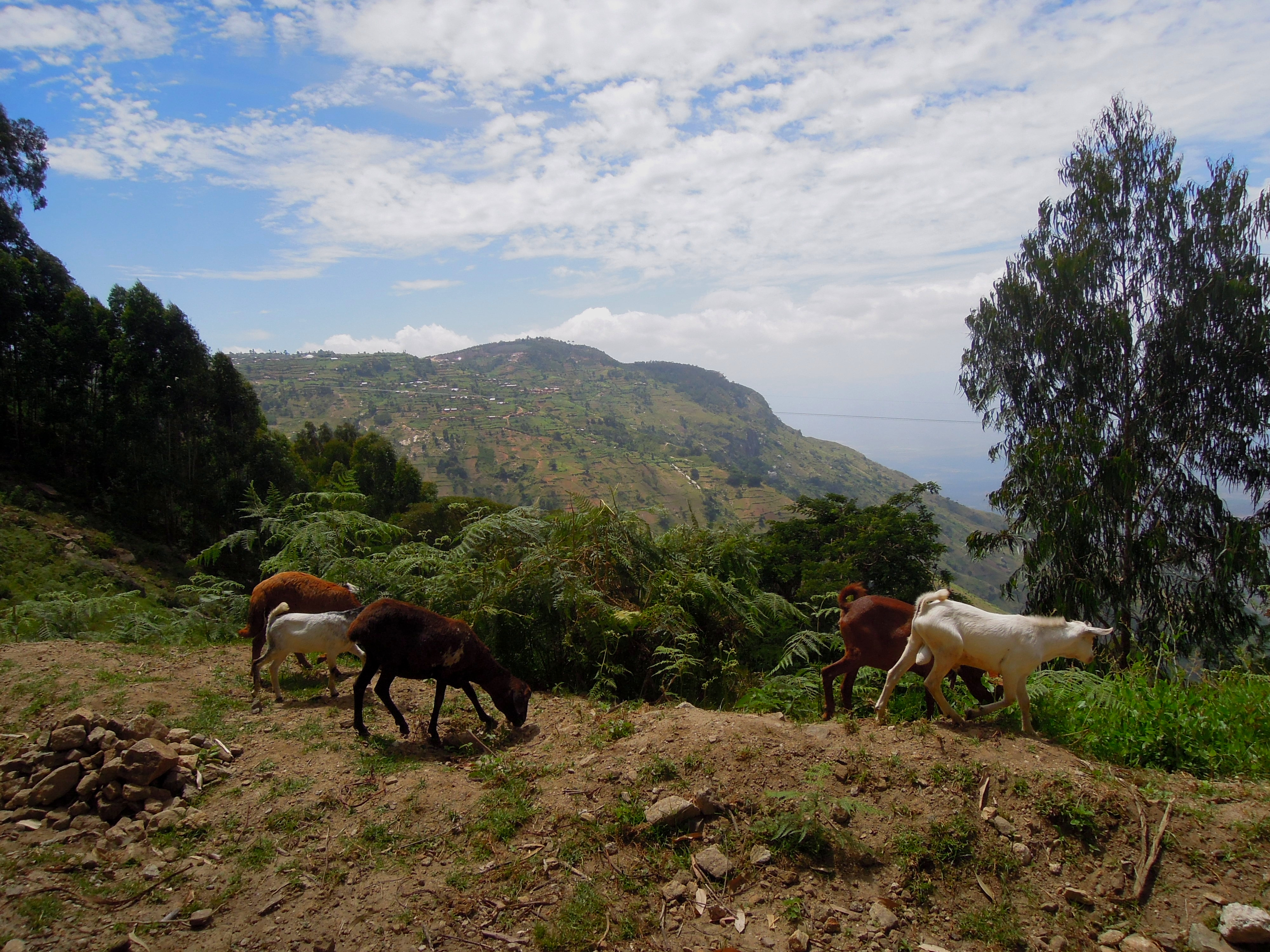 Między wioskami Mtae i Mambo, Usambara Mountains, Tanzania, fot. A. Mielczarek