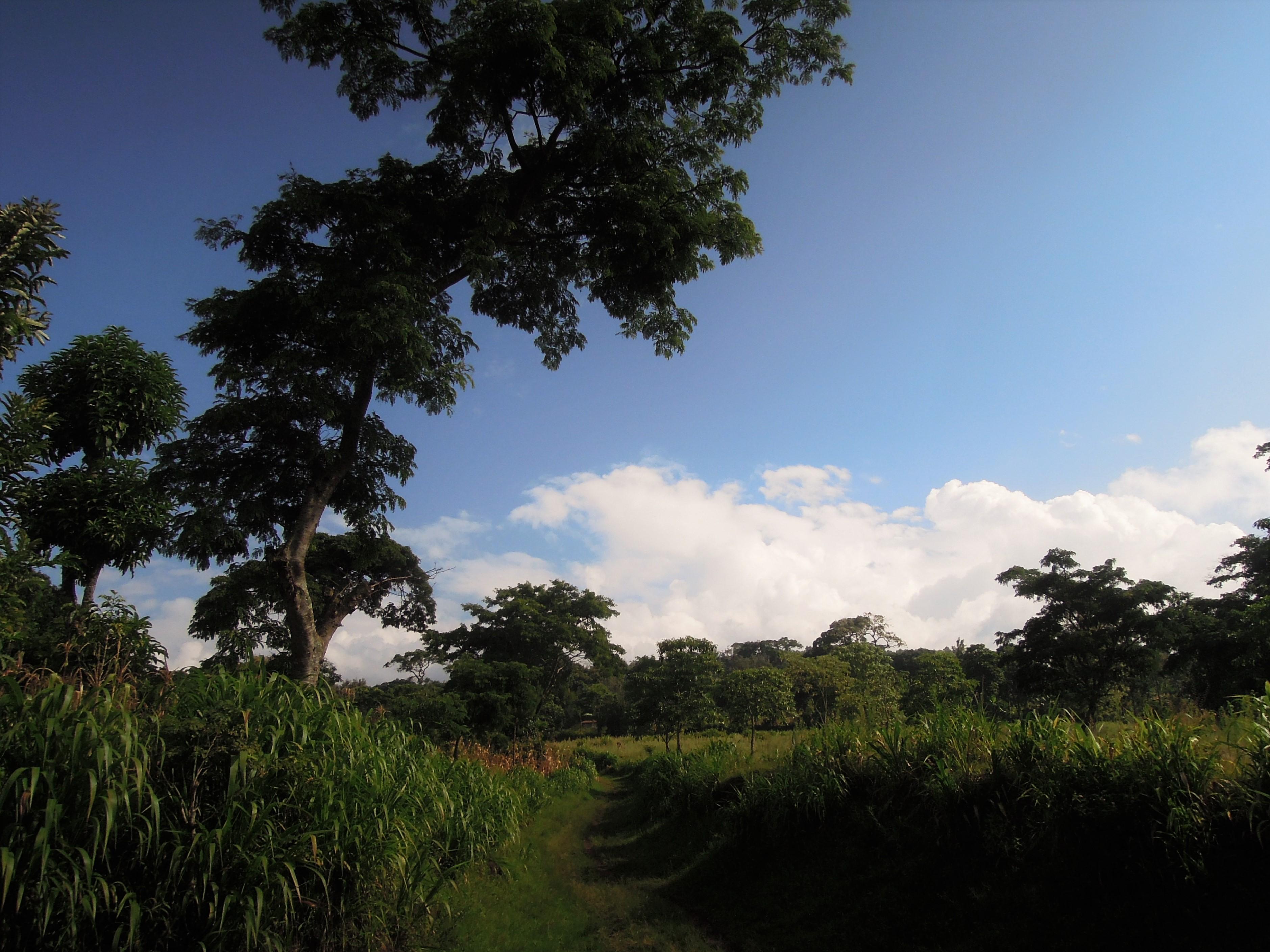 Zielone tereny regionu Kilimanjaro, Tanzania, Afryka, fot. M. Lehrmann